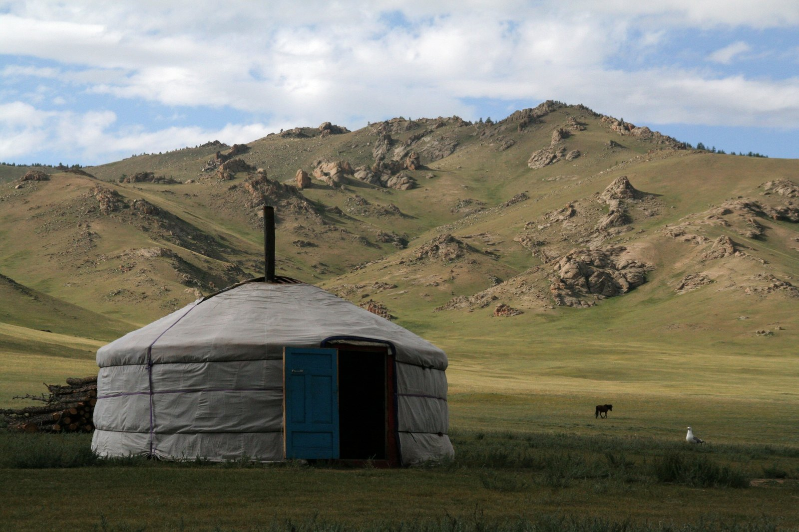 Mongolie: into the wild